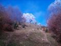 Poze si Imagini Bran | Peisaje de toamna