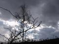 Cer de furtuna
