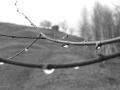 Poze Bran | fotografii artistice bran | Galerie foto bran