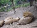 Lei Zoo Brasov