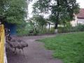 Emu  Zoo Brasov