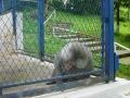 Maimute Zoo Brasov
