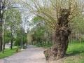 Poze cu Parcul Poporului Craiova | Imagini din Oltenia