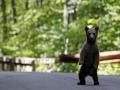 Ursul in Strada