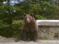 Ursul din Sinaia