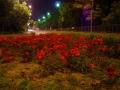 Orasul Timisoara | Poze Timisoara